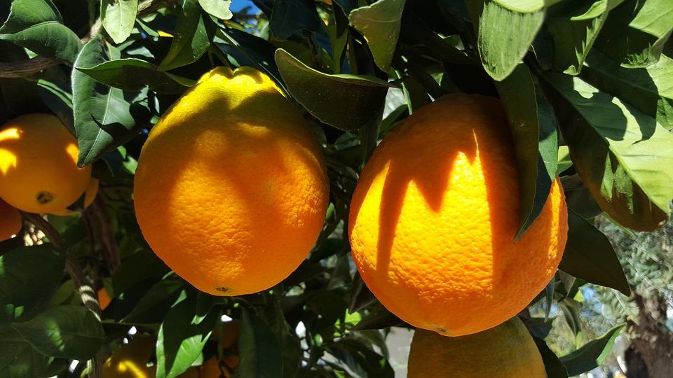 La Route des Orangers  7jours/6nuits