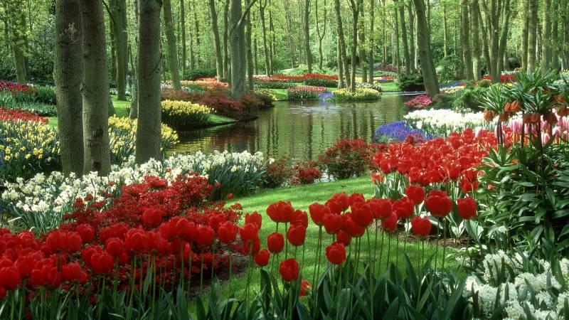 Le magnifique parc de Keukenhof au Pays Bas